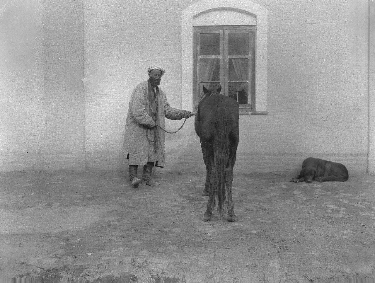 Бадахшанский жеребец-семилетка