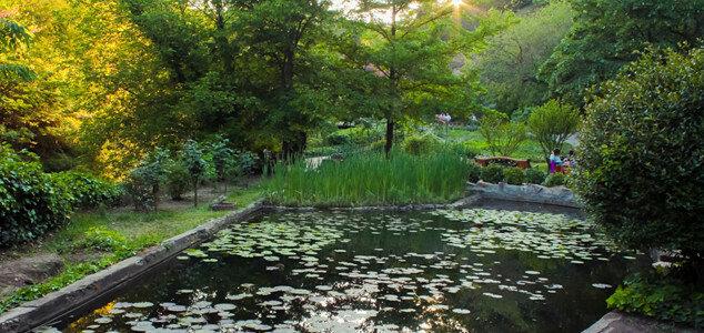 Тбилисский ботанический сад расположен практически в центре города