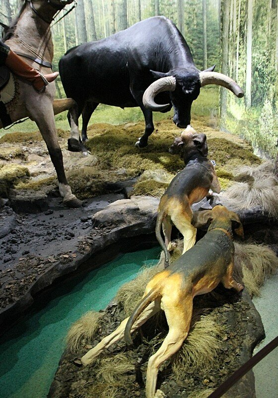 Беловежская пуща. Музей природы