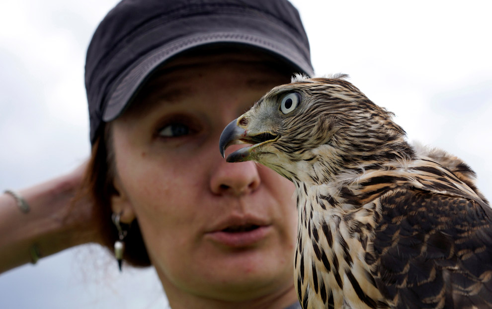 На самом деле, это не просто баловство: использование специально обученных ловчих птиц считаетс