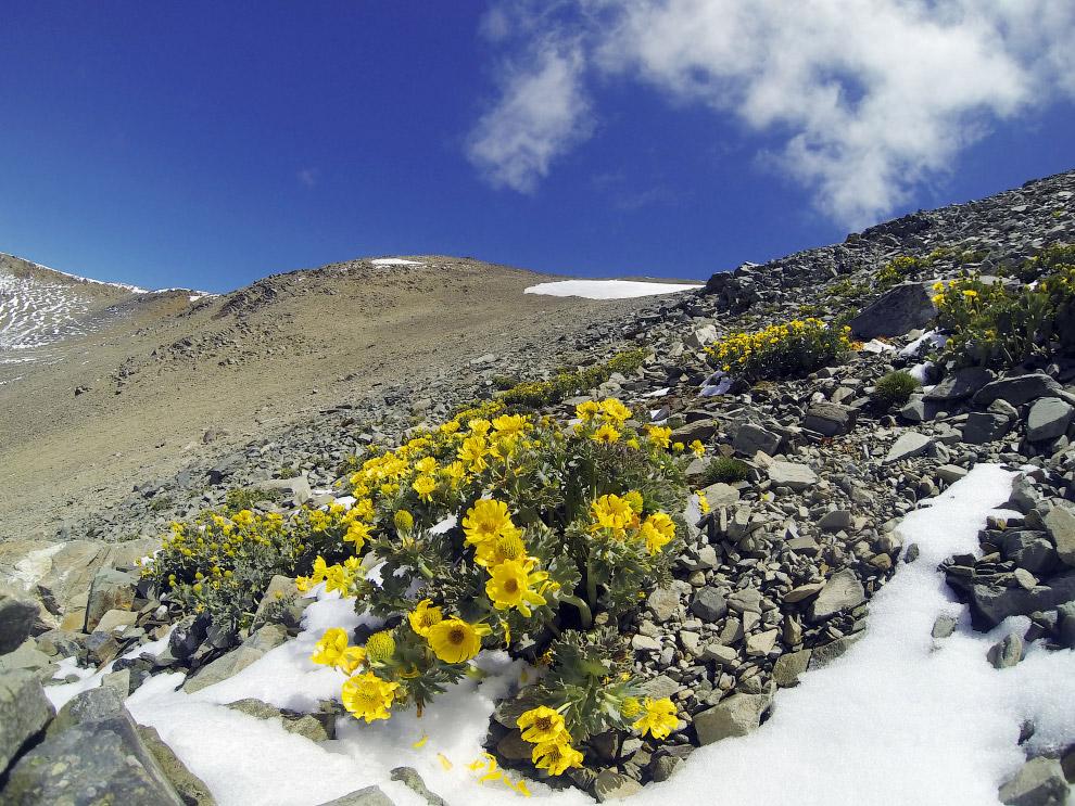 18. Вета — собирательное название более чем 100 видов, обитающих на территории Новой Зеландии.
