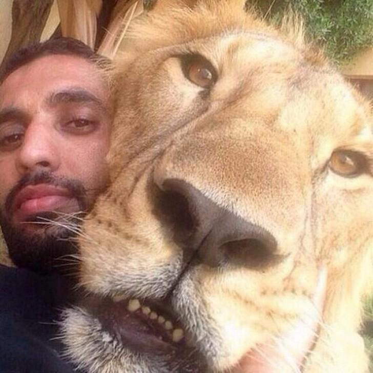 11. Где бы то ни было рядом со львом.