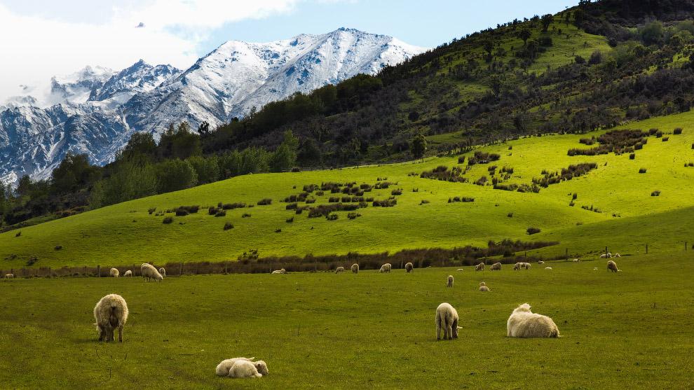 10. Еще один местный житель. Это гаттерия. Обитает на нескольких небольших островах Новой Зеландии.