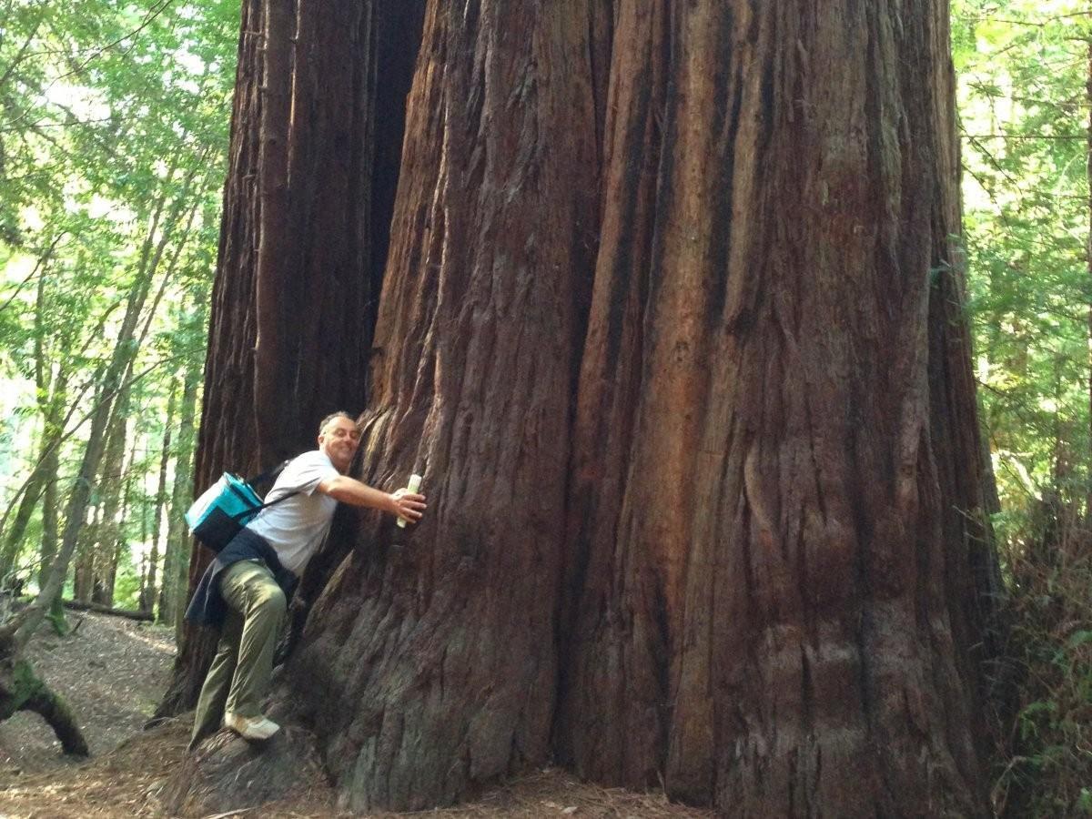 86. Попытайтесь обнять гигантское мамонтово дерево в Северной Калифорнии.