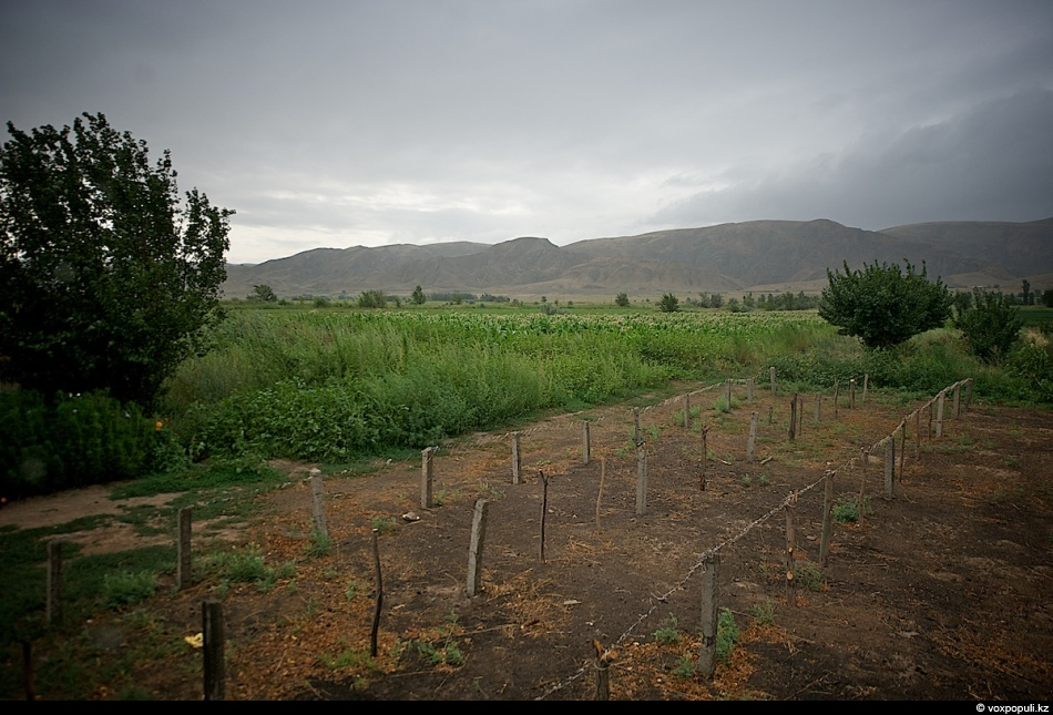 1. Семена табака обычно высевают в феврале, а высадку рассады в открытый грунт проводят в апреле-мае