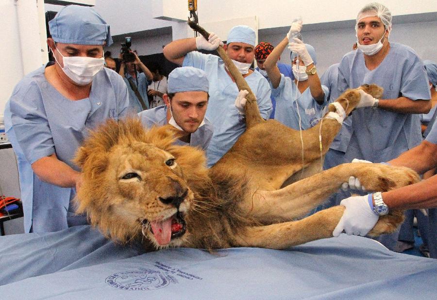 1. Совсем недавно - в минувший четверг ветеринарные специалисты из зоопарка