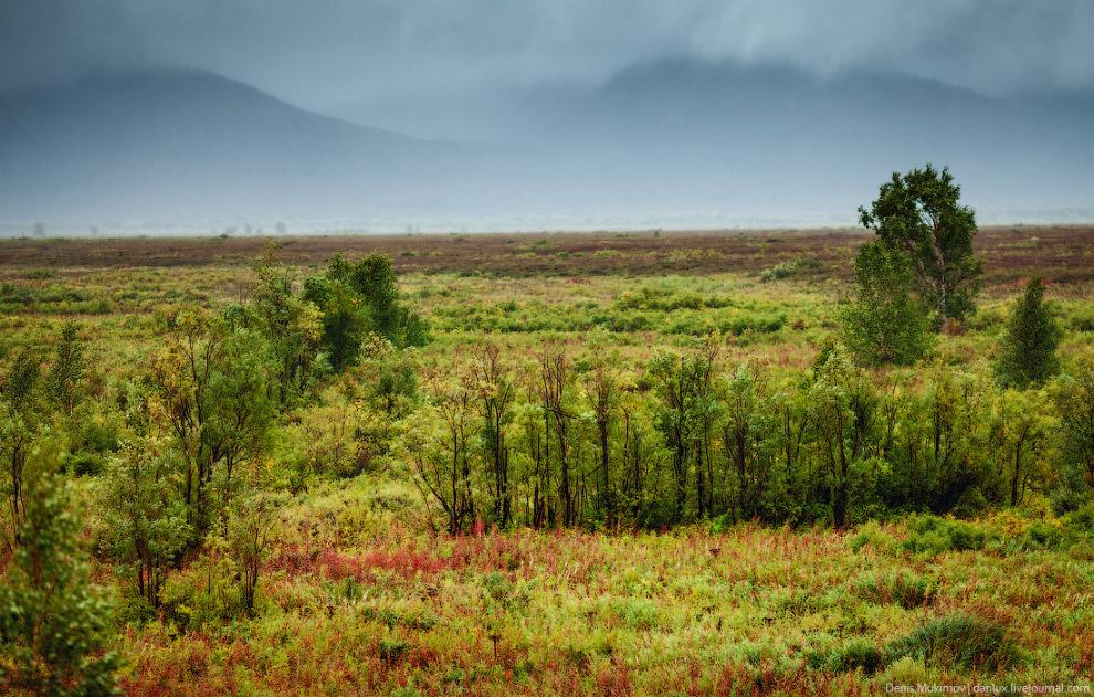 5. Дорога в деревню Долиновка. Из-за высокой влажности на Камчатке очень густые леса, но почти
