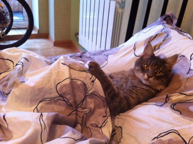 © sassybaconstrip.tumblr.com  Ведь она так устает, изо всех сил стараясь сделать вашу жизнь ве