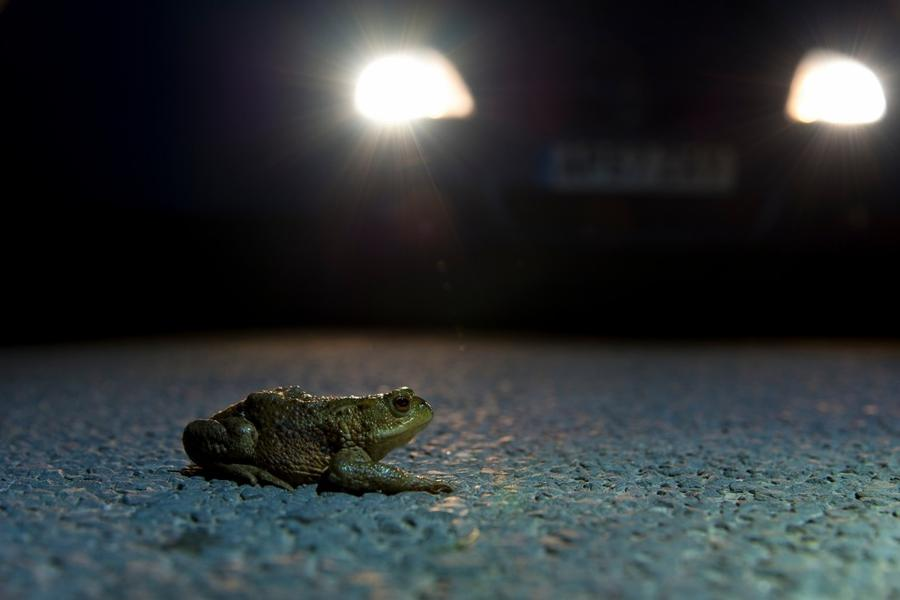 12. Категория «Документальная серия». «Жабы на дорогах». Национальный парк Болота Северного Йорка, С