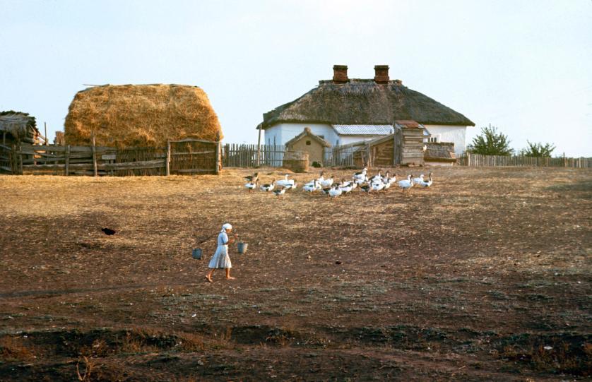 Совхоз им. Буденного, где студенты из Ростова работали тем летом. Фото: Билл Эппридж.