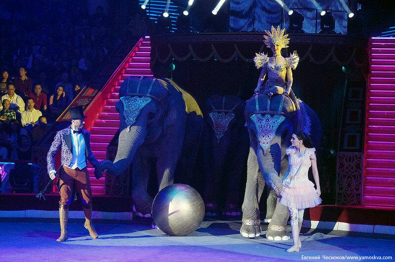 Осень. Цирк. Корниловы. слоны. 02.09.16.02..jpg