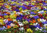 Цветочная поляна.