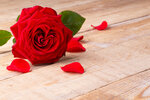 Roses_Closeup_Wood_planks_Red_Petals_517148_1280x853.jpg