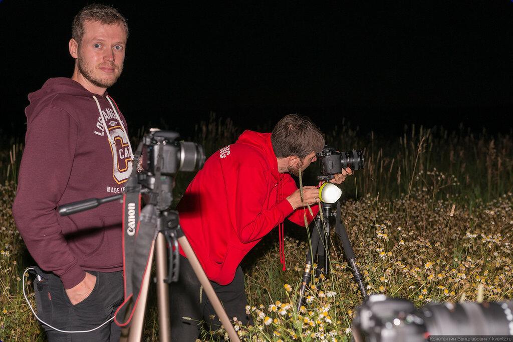 А сейчас мы наблюдаем стайку ночных сурикатов