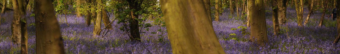 Bow Bow Wood / фото George Robinson-White