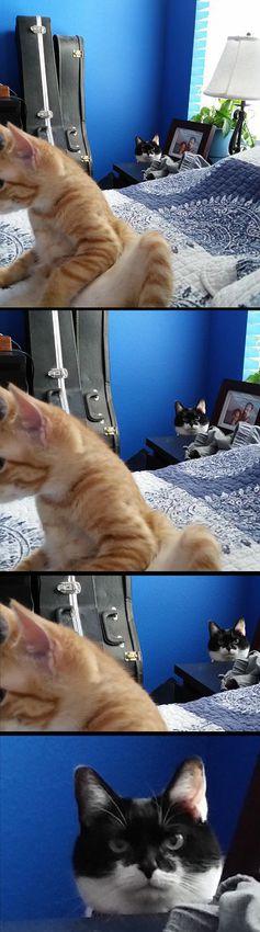 А этот котик, похоже, ревнивец.