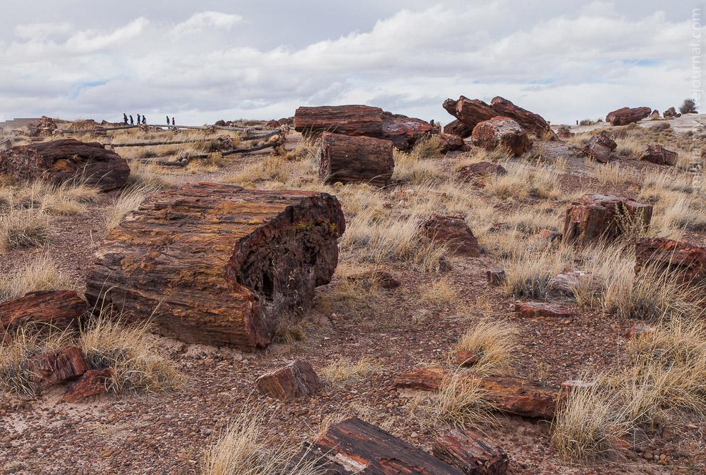 4. Деревья относятся к триасовому периоду (250-200 миллионов лет до н.э.). Упавшие за счет есте