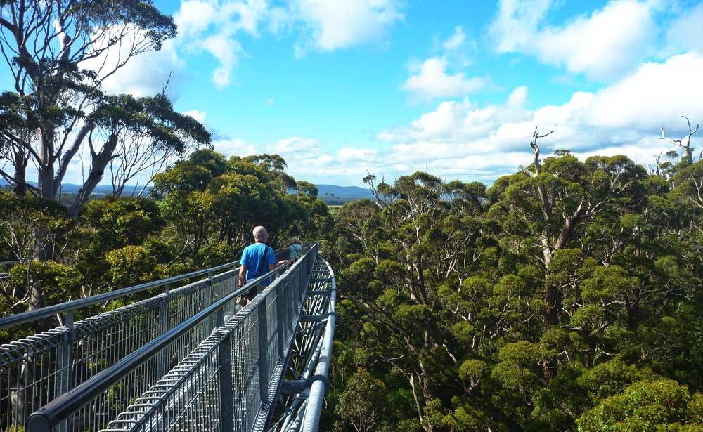 Можно совершить незабываемую прогулку среди верхушек 400-летних деревьев. Тропа изтитана Tree Top W
