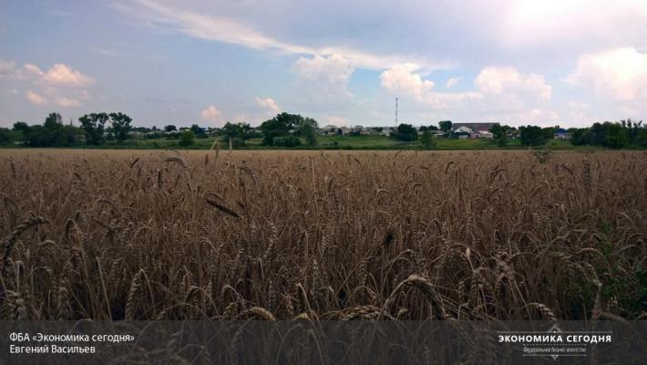 Замену Турции для экспорта зерна найдем максимум через 5 месяцев— Ткачев