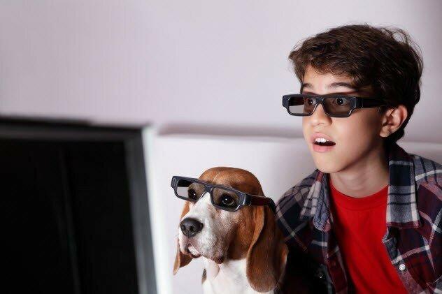 Собаки ничего не видят на экране плазменного телевизора