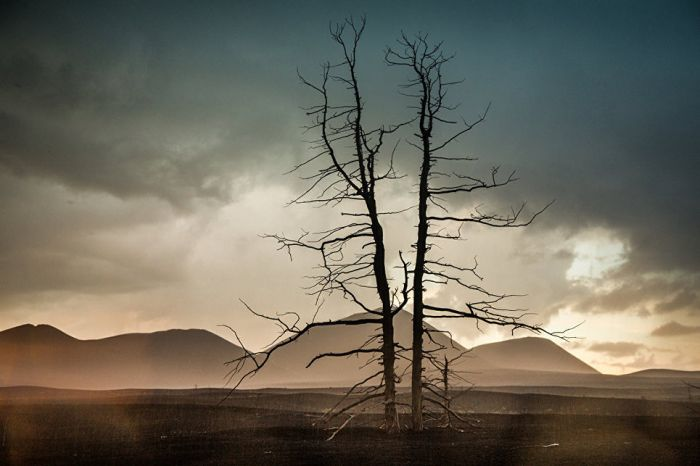 Туманные сумерки в долине мертвого леса.