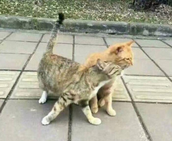 история любви из животного мира