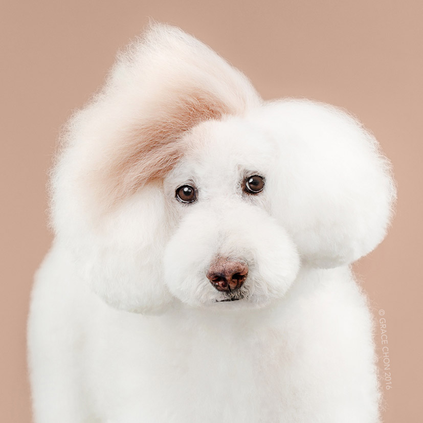 Grace Chon - Hairy - Athena после посещения парикмахера