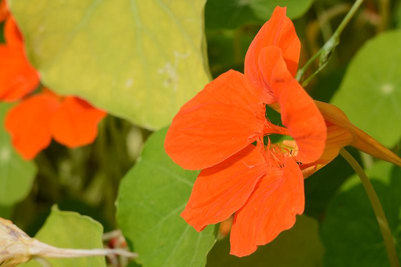 цветочное 17 16.jpg