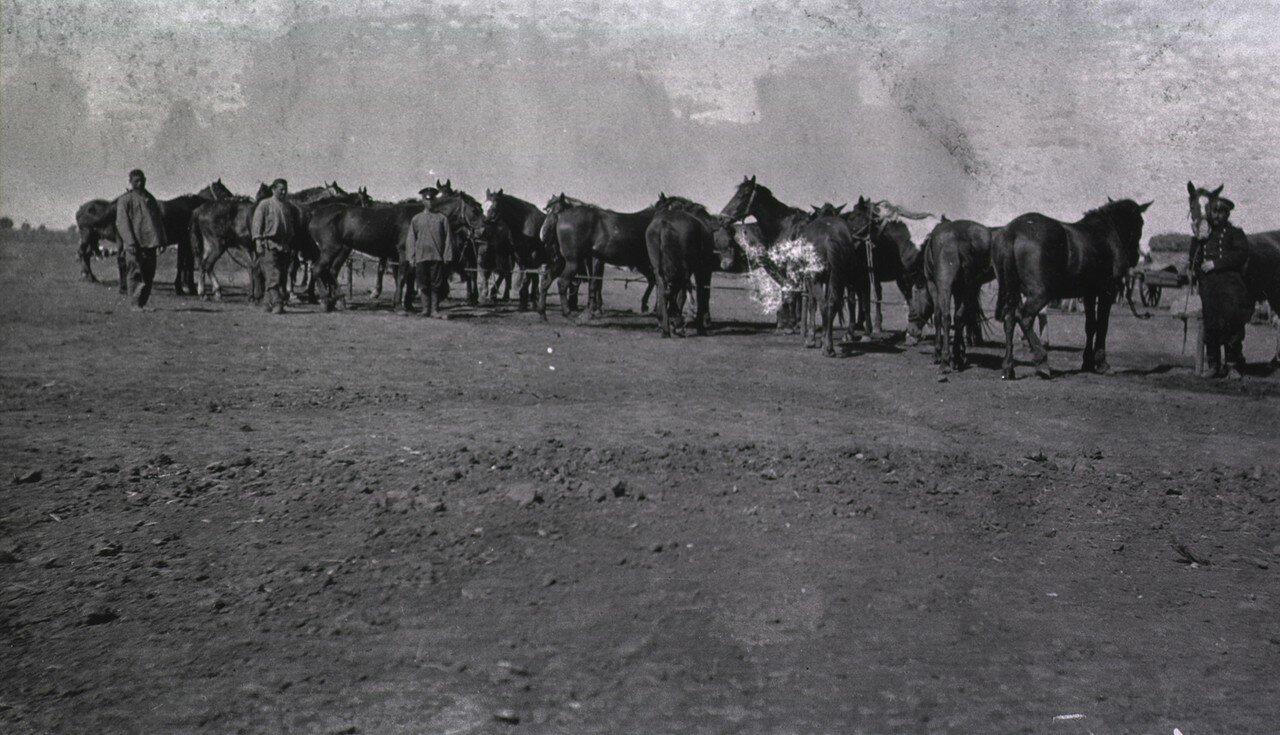 Лошади полевого госпиталчя