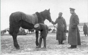 1915. Снаряжение лошади
