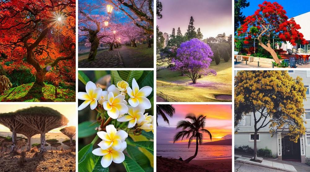 Самые фотогеничные деревья