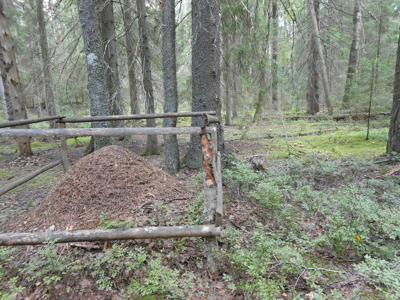 Лес в районе деревни Долгие Бороды