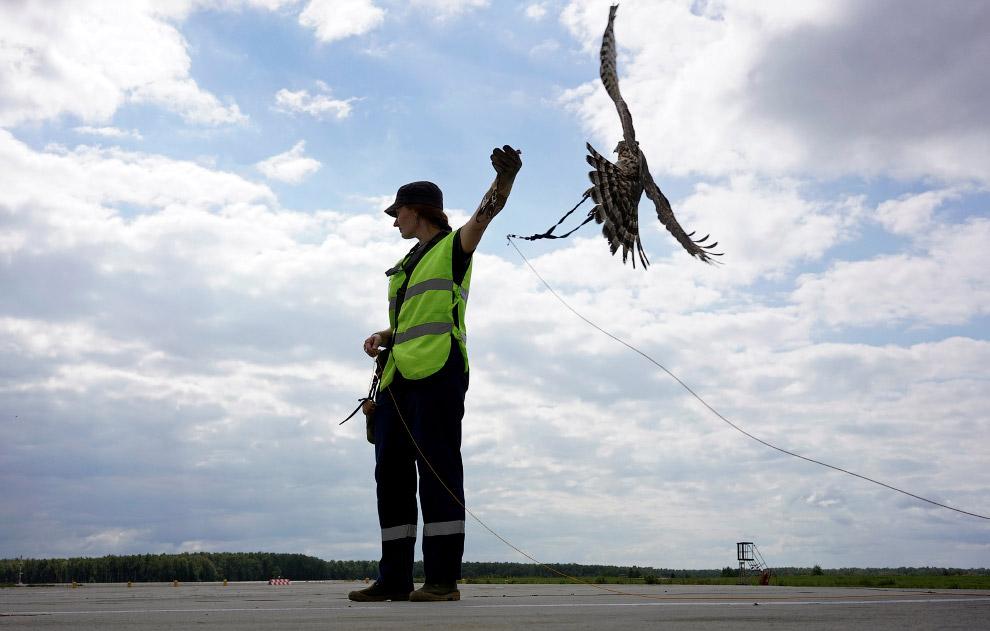Один из самых «живых» методов борьбы с летающими динозаврами (гипотеза о происхождении птиц от