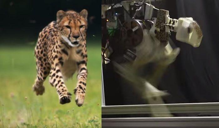 Американский робот-гепард бегает со скоростью 16 км/час
