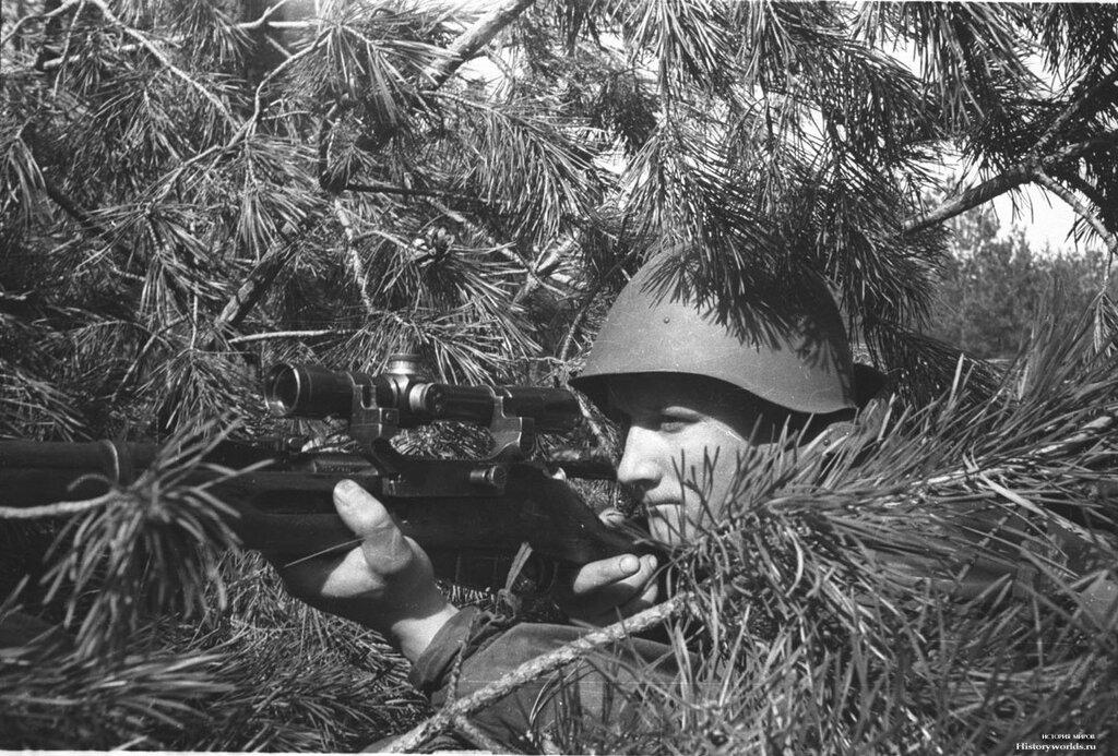 Советский снайпер в сосняке.jpg