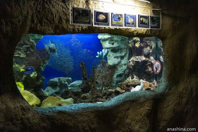 Океанариум в парке Ривьера, Сочи