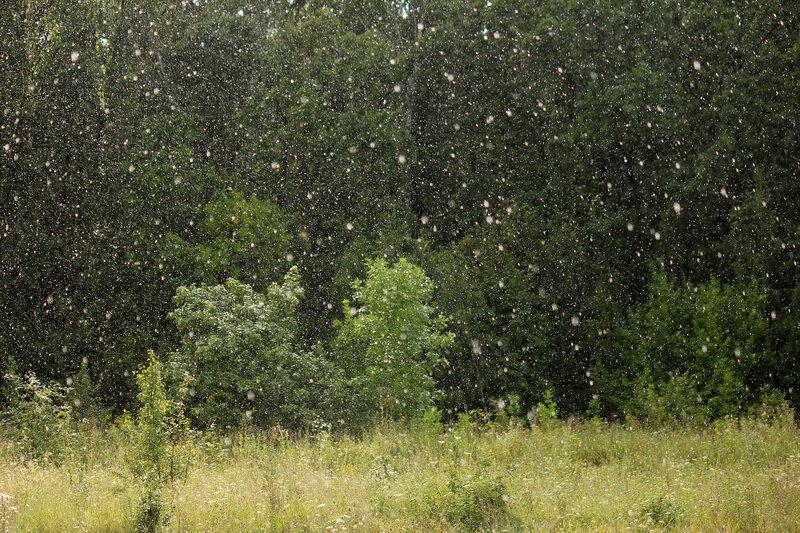 Дождь на перегоне Лужки-Орловские - Паньково. Крупно