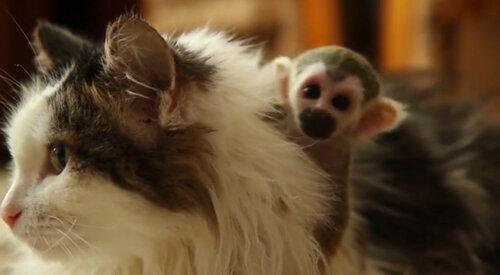 Западные СМИ умилила кошка изТюмени, усыновившая обезьянку Федора