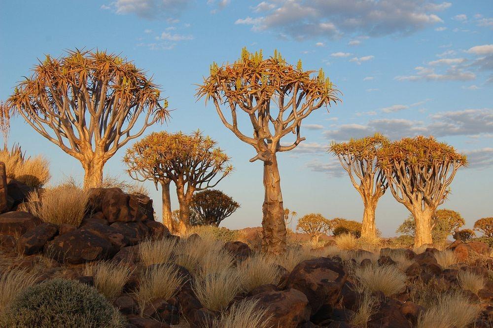 Удивительный Колчанный Лес в Намибии