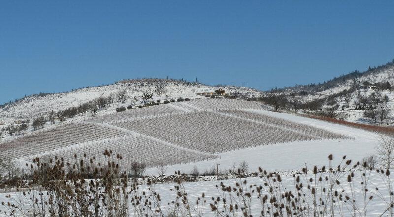 Виноградники и снег