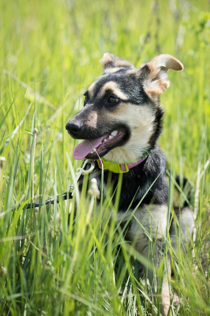 Шайло Захара собака из приюта догпорт