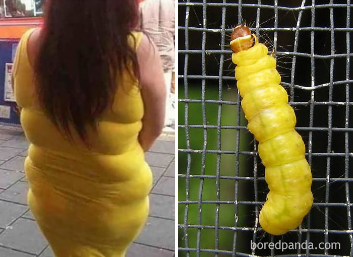 Эта девушка или гусеница?
