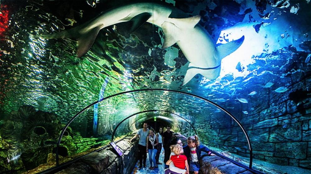 Наосмотр этого грандиозного аквариума может уйти 3–4часа. Sydney Aquarium разделен натематические