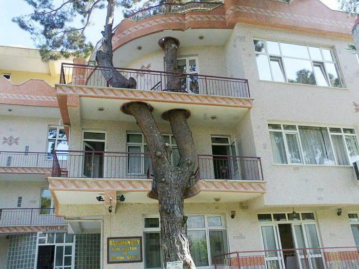 2. Дом с деревом