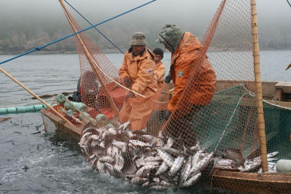 """Что даст принятие закона """" О рыболовстве и сохранении ВБР"""" российским рыбохозяйственным организациям"""
