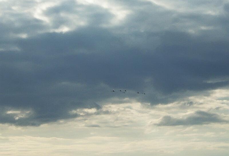 летят гуси