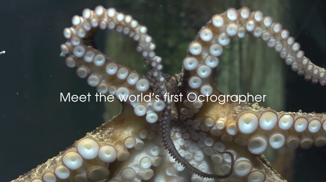 The octopus is a fascinating creature. And its well-documented intellect has led more and more scien