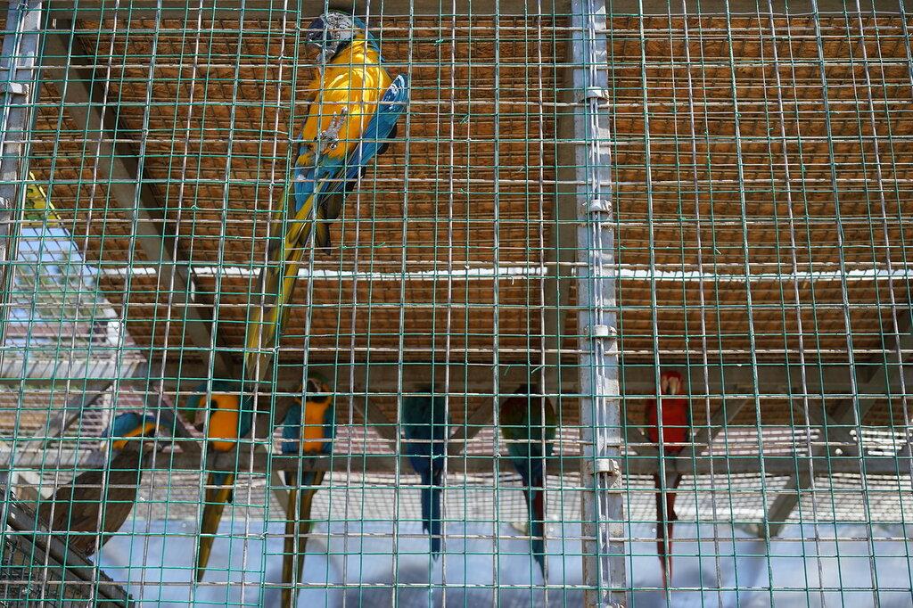 Какаду в клетке в зоопарке. Сафари-парк, Геленджик.