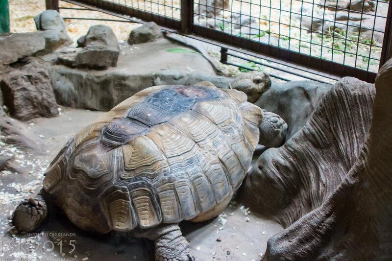 kyiv_zoo-24.jpg