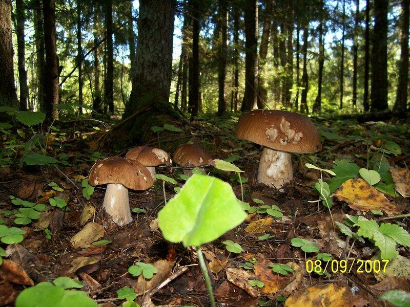 Урожай грибов